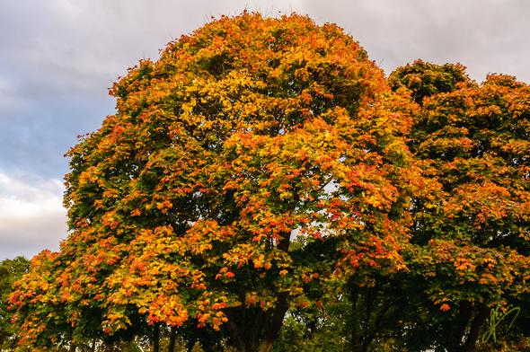 Autumn Foliage at Kingsbury Water Park.