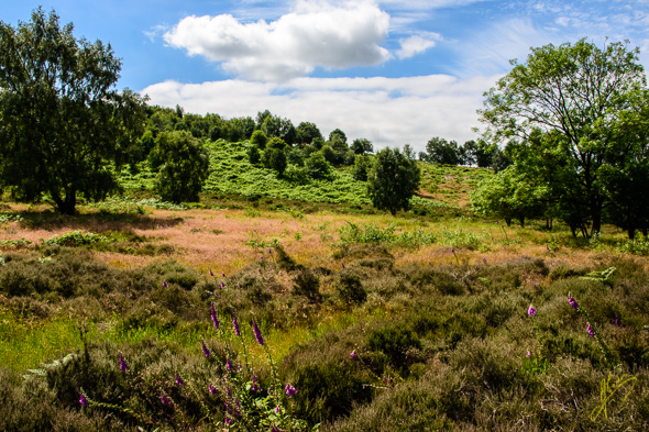 Cannock Chase, Staffordshire.
