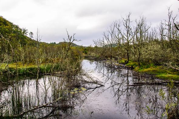 Dubh Loch Beaver Habitat.