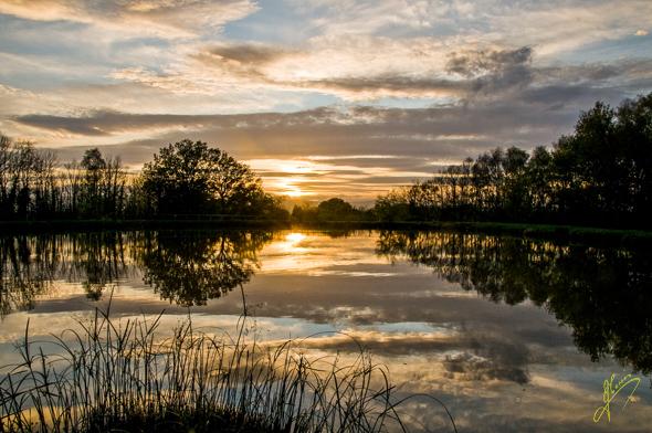 Evening Light at Eddies Pool, Ryton Farm.