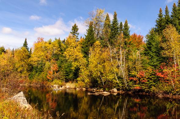 Fall Foliage, Bretton Woods.