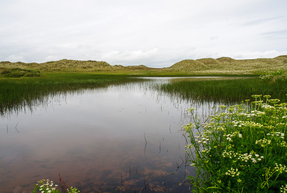 Forvie Scotland National Nature Reserve.