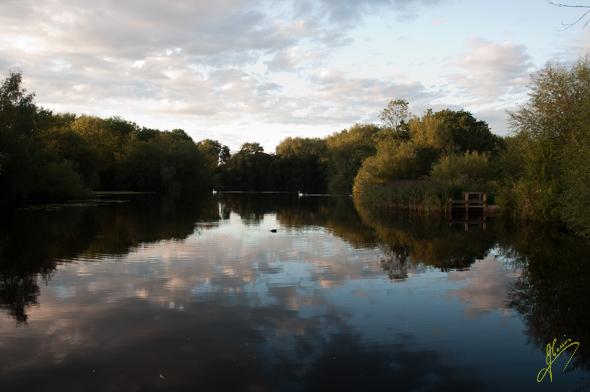 Gibson Pool, Kingsbury Waterb Park.
