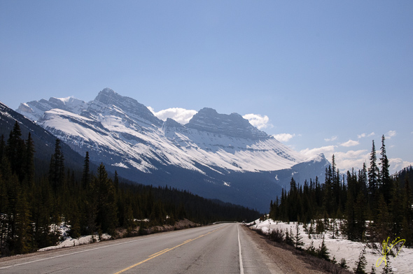 Icefields Parkway.