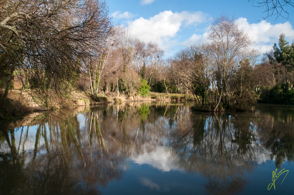 Mamhead Lake.