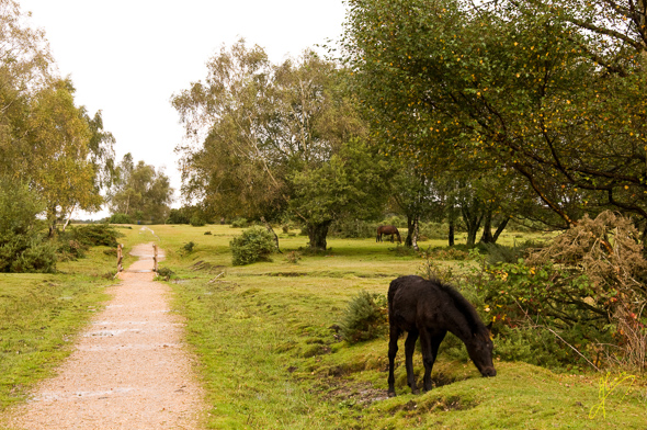 New Forest Trail.