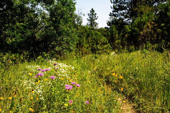 Prairie Trail, Custer State Park.