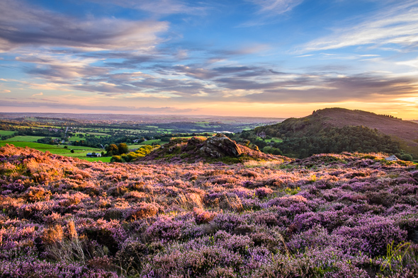 Evening Light on the Heather, at Ramshaw Rocks.