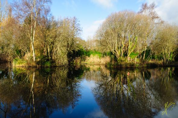Reflections, Cofton Pools.