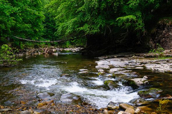 River Allen.