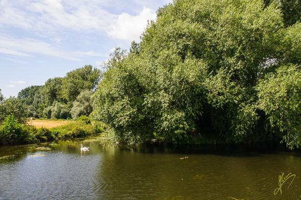 River Lark, Mildenhall.