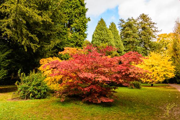Westonbirt Arboretum.