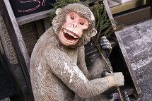 Evil Monkey Sale