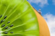 Giant Kiwi - Te Puke