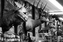 Hunting Store, Durango