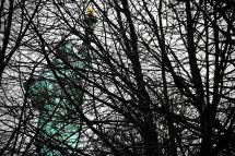 Liberty through Trees