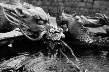 Water Dragon - Nikko