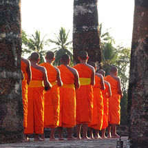 Sukhothai saffron