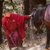 Novice and horse