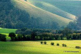 Someware in Wiltshire?