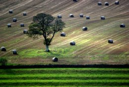 Lone Tree the Cotswolds