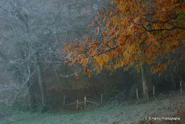 Ipsden - Frost