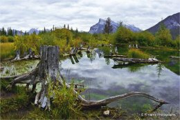 Vermillion  Lakes  BC