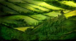 Linton Moor