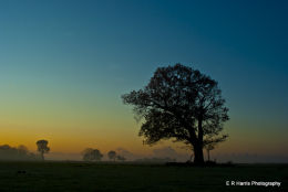 New Forest 1