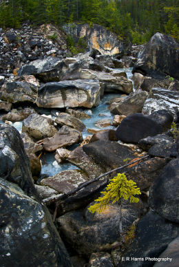 Rocky Meltwater Creek BC 2