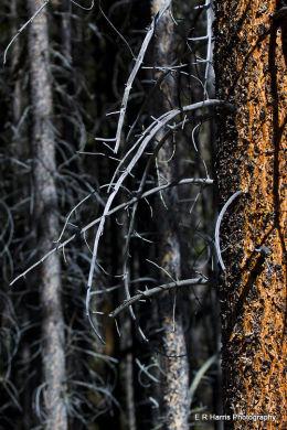 Burnt pines BC