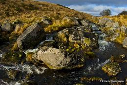 Wistman,s Wood Dartmoor