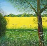 Primary Colour -  YELLOW,  Oilseed Rape, 57cm x 57cm