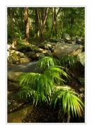 Cedar Creek, Queensland