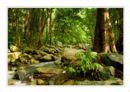 Cedar Creek, Queensland.