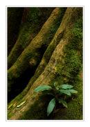 Rainforest Contours