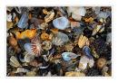 Small Shells