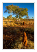 Tales from the Savannah, Northern Territory.