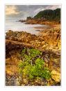 Coastline, Joseph Banks reserve, Queensland