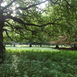Holkham Hall Park, North Norfolk