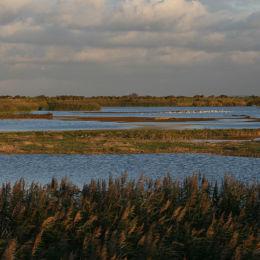 Titchwell RSPB Reserve, North Norfolk