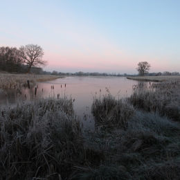 Frosty morning, Marsh Lane NR, W Mids