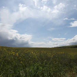St Abbs, Northumbria