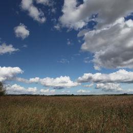 Snape Maltings to Iken, Suffolk