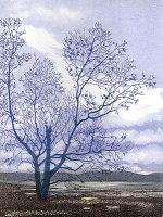 medium landscapes