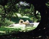 2 Botanic Gardens