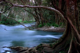 MH0057 mulgrave river RS
