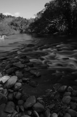MH0059 Mulgrave River  BW RS