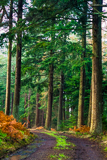 Kyloe Wood