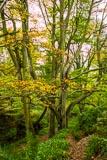 Autumn colours near Routin Lynn